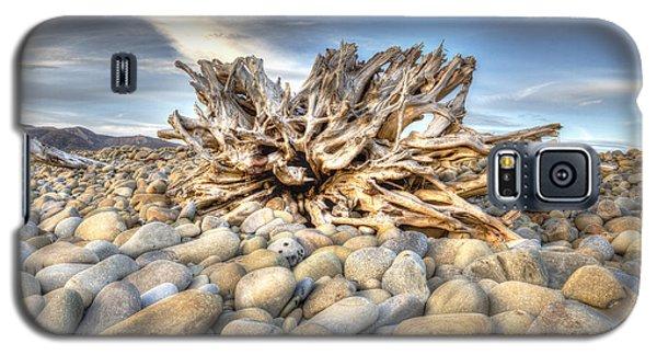 Ventura River Tree Galaxy S5 Case by Joe  Palermo