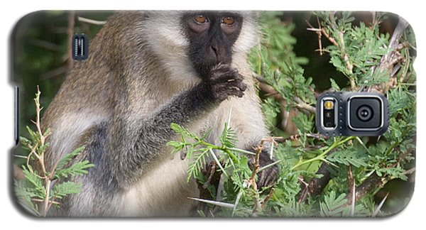 Galaxy S5 Case featuring the photograph Vervet Monkey by Chris Scroggins