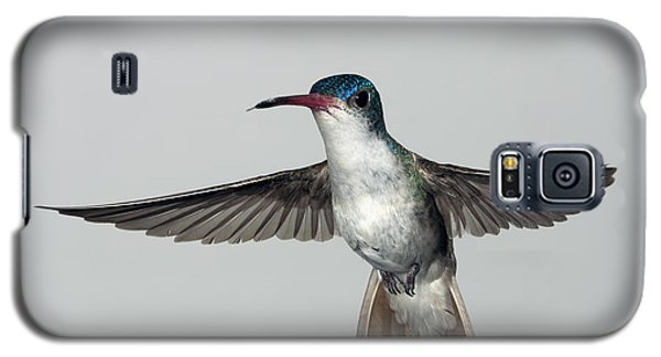 Violet-crowned Hummingbird Galaxy S5 Case