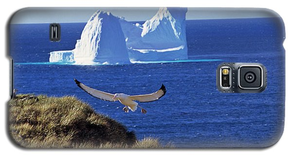 Wandering Albatross (diomendea Exulans Galaxy S5 Case by Martin Zwick