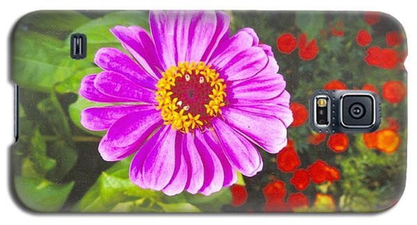 Warm Pink Zinnia Galaxy S5 Case by Rod Ismay