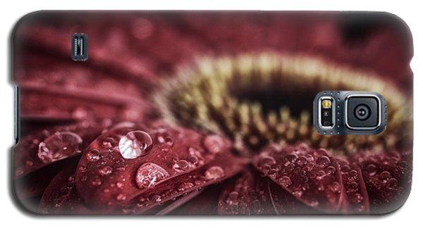 Waterdrops On A Gerbera Daisy Galaxy S5 Case