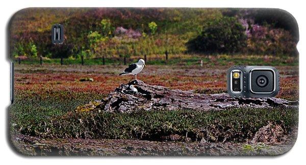 Western Gulls Nesting In A Log Galaxy S5 Case