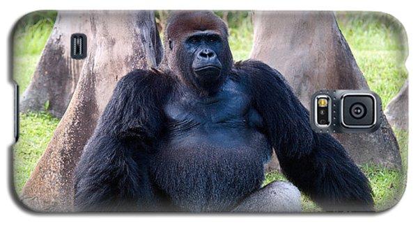 Western Lowland Gorilla Galaxy S5 Case