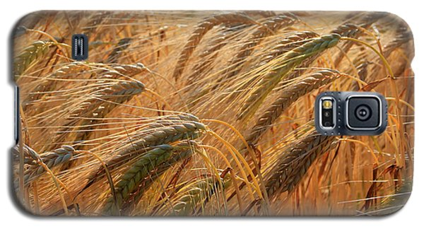 Wheat Galaxy S5 Case