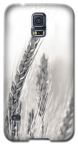 Wheat Galaxy S5 Case