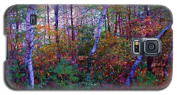 White Birch - Pocono Mountains Galaxy S5 Case by Susan Carella