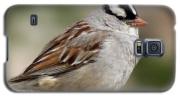 White Crowned Sparrow Galaxy S5 Case