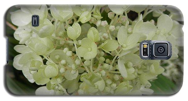 White Hydrangea Galaxy S5 Case by Pema Hou