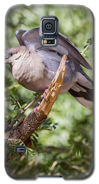 Galaxy S5 Case featuring the photograph White-winged Dove by Beverly Parks