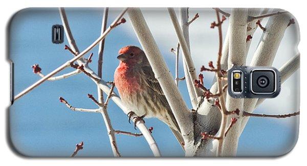Wintering Sparrow Galaxy S5 Case