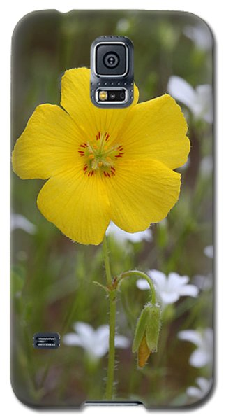 Wood Sorrel And Sandwort Galaxy S5 Case