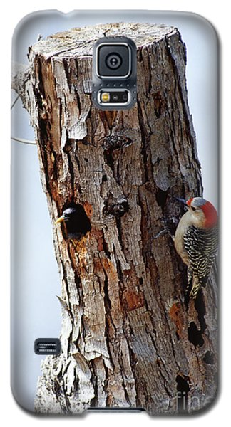 Woodpecker And Starling Fight For Nest Galaxy S5 Case by Gregory G. Dimijian