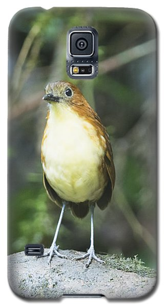 Yellow-breasted Antpitta Galaxy S5 Case