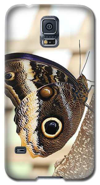 Yellow-edged Giant Owl Butterfly #4 Galaxy S5 Case by Judy Whitton