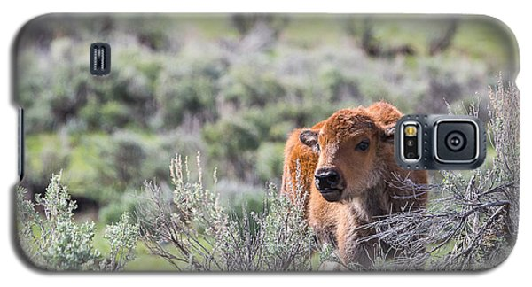 Bison Calf Galaxy S5 Case