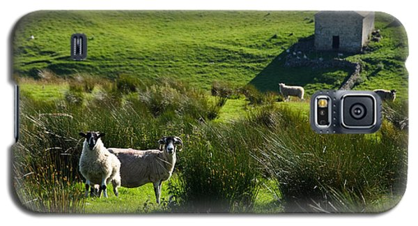Yorkshire Sheep Galaxy S5 Case
