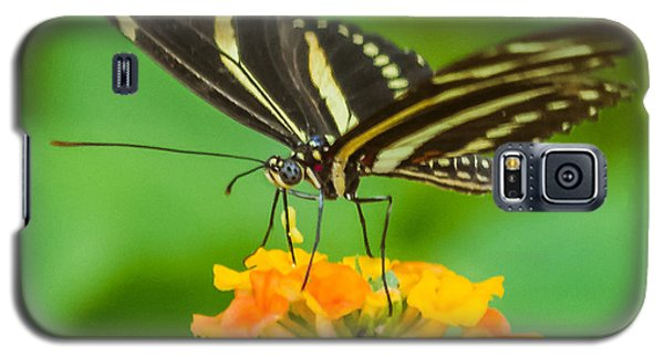 Galaxy S5 Case featuring the photograph Zebra Longwing by Jane Luxton