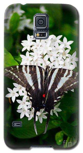 Zebra Swallowtail Galaxy S5 Case by Angela DeFrias
