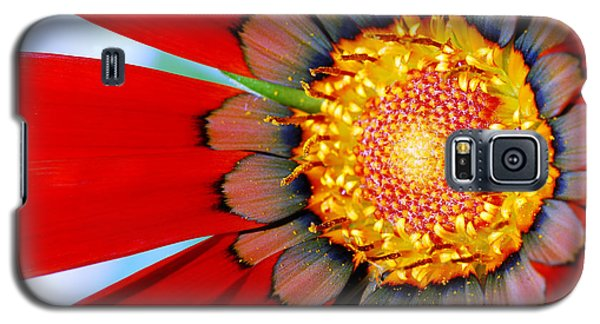 Galaxy S5 Case featuring the photograph Zinnia In Red by Wendy Wilton