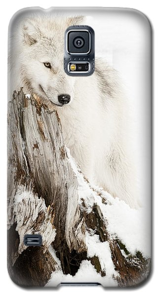 Arctic Wolf Pup Galaxy S5 Case