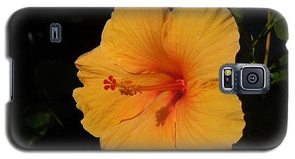 Hibiscus Galaxy S5 Case by Ron Davidson