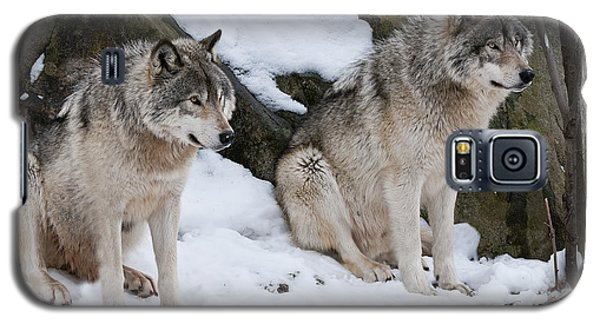 Timber Wolves Galaxy S5 Case by Wolves Only