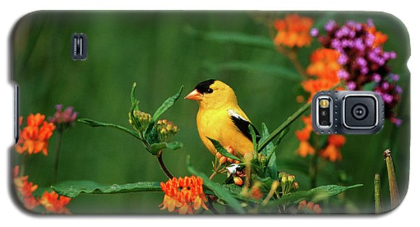 Canary Galaxy S5 Case - American Goldfinch (carduelis Tristis by Richard and Susan Day