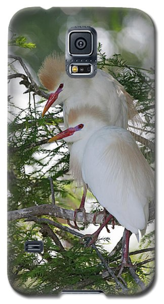 Usa, Florida, St Galaxy S5 Case by Jaynes Gallery