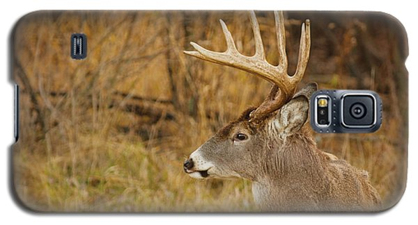 12 Point White-tail Galaxy S5 Case