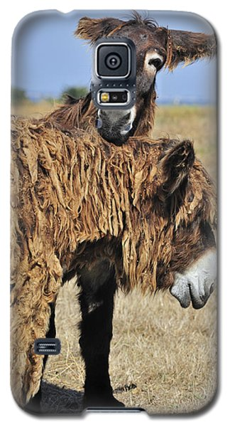 Galaxy S5 Case featuring the photograph 120920p028 by Arterra Picture Library