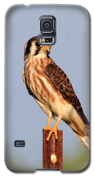 American Kestrel Galaxy S5 Case
