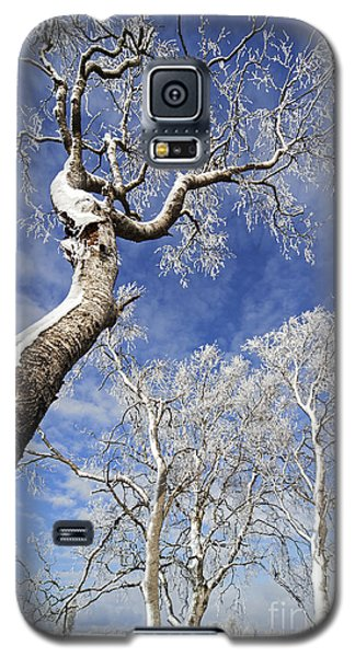 Galaxy S5 Case featuring the photograph 130201p343 by Arterra Picture Library