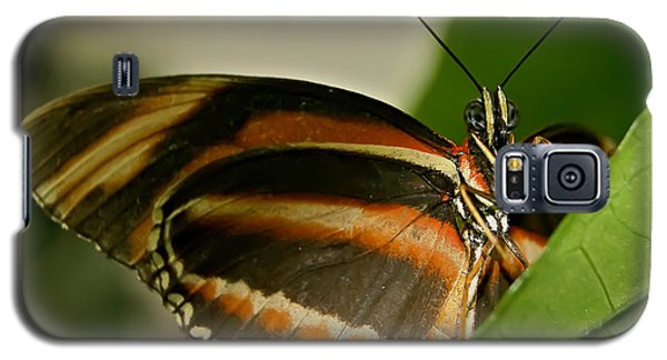 Galaxy S5 Case featuring the photograph Butterfly by Olga Hamilton