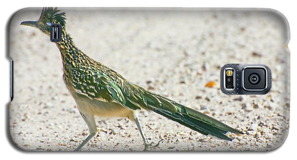 Roadrunner Galaxy S5 Case - Usa, New Mexico, Bosque Del Apache by Jaynes Gallery