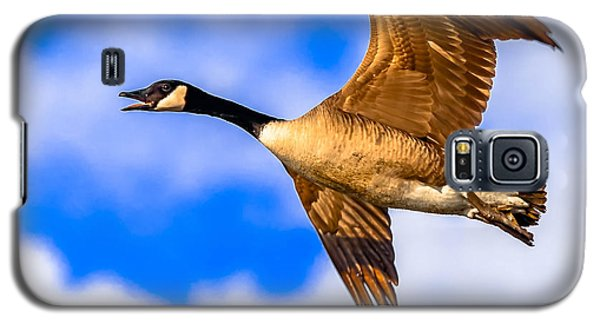 Galaxy S5 Case featuring the photograph Canada Goose by Brian Stevens