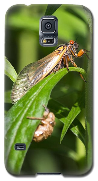 Galaxy S5 Case featuring the photograph 17 Year Itch by Rebecca Sherman