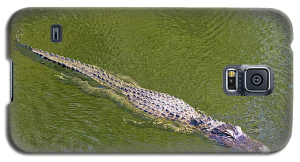 Usa, Florida, Everglades National Park Galaxy S5 Case by Jaynes Gallery