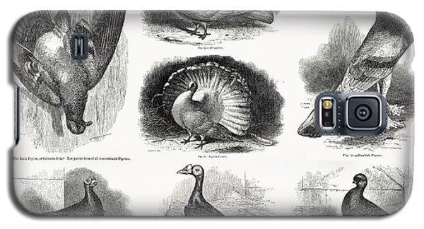 1868 Darwin Pigeon Breeds Illustration Galaxy S5 Case by Paul D Stewart