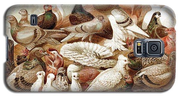 1870 Domestic Fancy Pigeon Breeds Darwin Galaxy S5 Case by Paul D Stewart