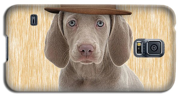 Weimaraner Collection Galaxy S5 Case by Marvin Blaine