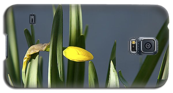 Galaxy S5 Case featuring the photograph 1st Daff by Joe Schofield