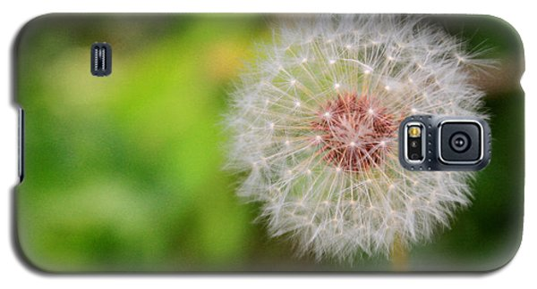 A Dandy Dandelion Galaxy S5 Case