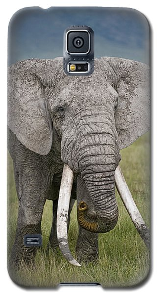 African Elephant Loxodonta Africana Galaxy S5 Case by Panoramic Images