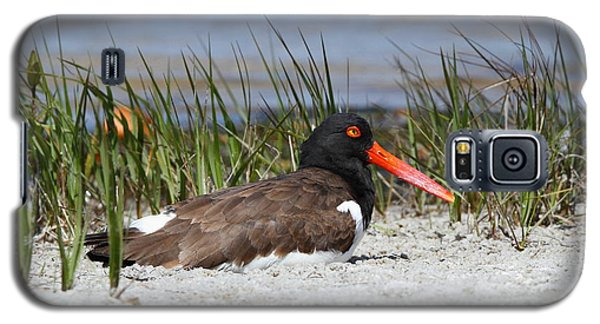 American Oystercatcher Galaxy S5 Case
