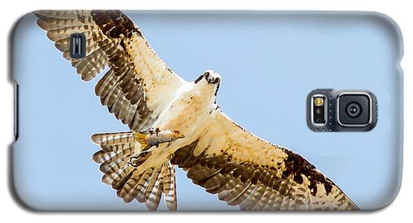 An Osprey Feeding On A Trout Galaxy S5 Case by Brian Williamson