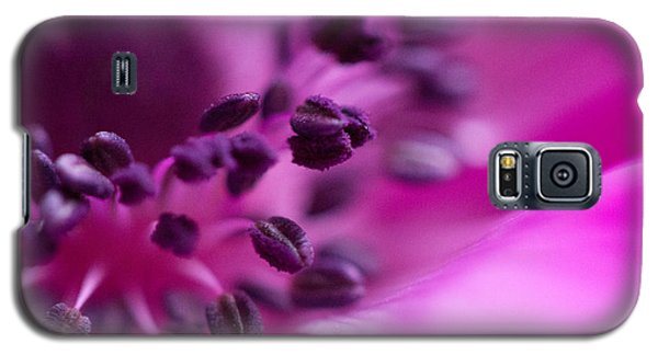 Anemone Galaxy S5 Case by Cathy Donohoue