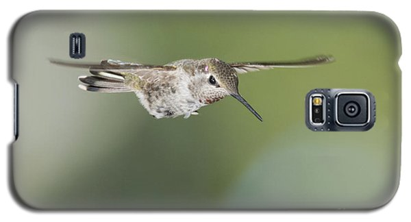 Anna's Hummingbird Galaxy S5 Case