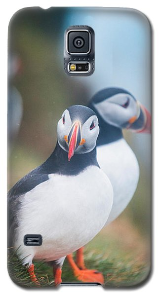Atlantic Puffins Fratercula Arctica Galaxy S5 Case