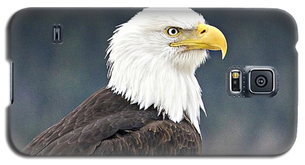 Bald Eagle Galaxy S5 Case by Sylvia Hart